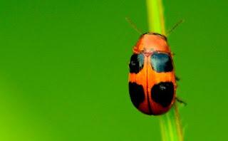 أسماء أصوات الحشرات ما هو صوت الحشرات