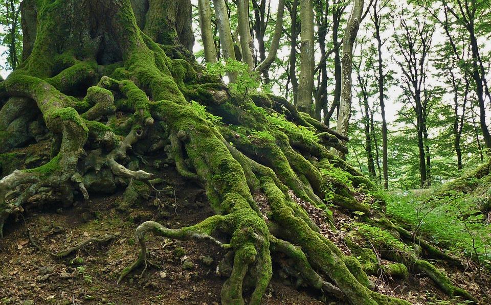 दुनिया को खाने वाले पेड़ो की अनसुनी कहानी - Mysterious stories of man eating trees