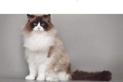 Jenis-Jenis Kucing Bulu Lebat Yang Ada Di Seluruh Dunia