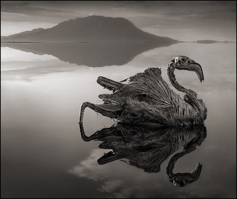 Lake Natron Calcified animals color