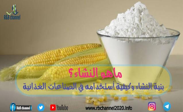 نشا | بنية النشاء وكيفية استخدامه في الصناعات الغذائية