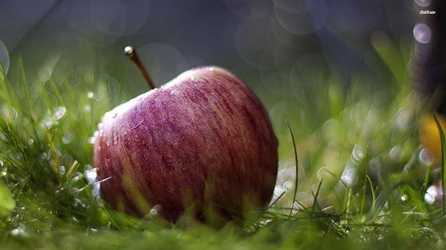 wallpaper gambar buah apel merah gratis