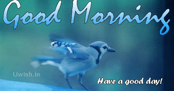 Good Morning With A Blue Bird Have A Good Day Uwish