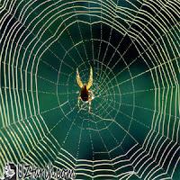Araknafobi, Arachnophobia