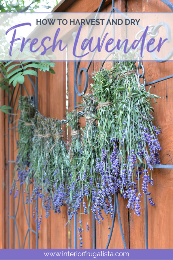 How To Harvest and Dry Fresh Lavender