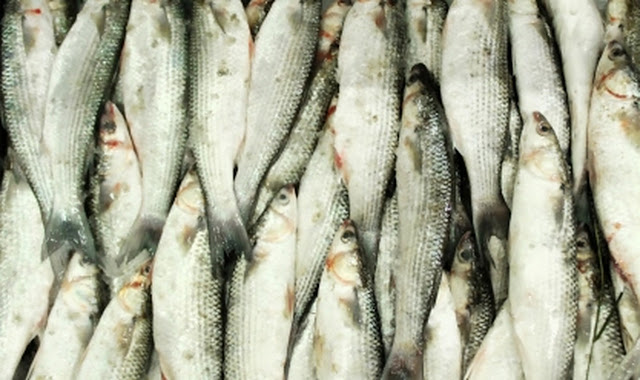 الجزائر و موريتانيا تتبادلان الأسماك و التمور بمناسبة شهر رمضان..