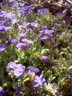 aiuola, giardino, montagna