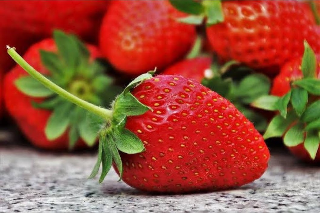 Benih Bibit Biji Giant Strawberry Stroberi Super Jumbo Import Tegal