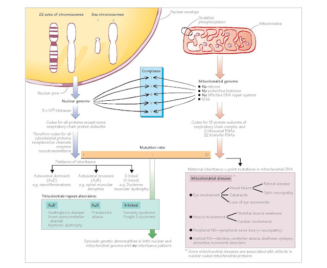 Neurogenetic Disorders