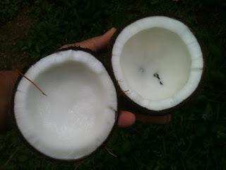 coconut-oil-white-palm