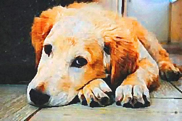 Matinya Anjing yang Tak Bisa Menggonggong