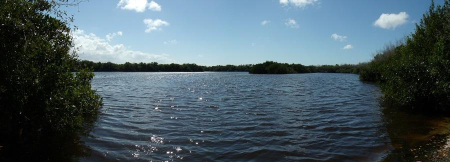 Agua dulce y salada entre los manglares