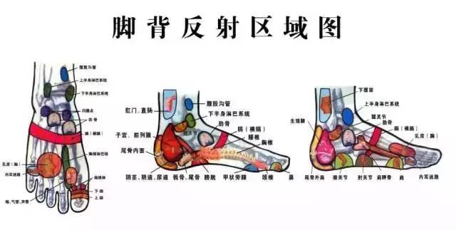 寒從腳下起,病從腳底除(百病治足)