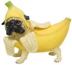 banana for dogs benefits |can dog eat banana