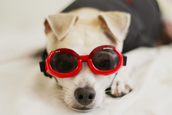 Doggle - Goggle for Dogs :)