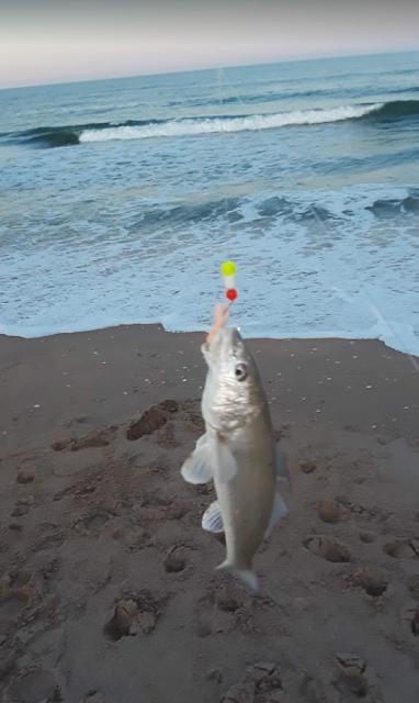 Florida East Coast Surf Fishing Reports Florida Fishing