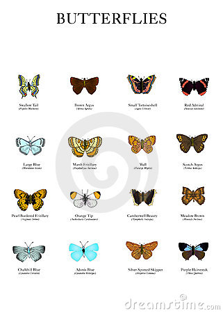 https://www.dreamstime.com/stock-photos-butterflies-image7871283#res487314