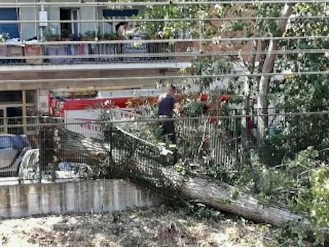 Caos sulla Roma-Lido: crolla un albero, treni in tilt