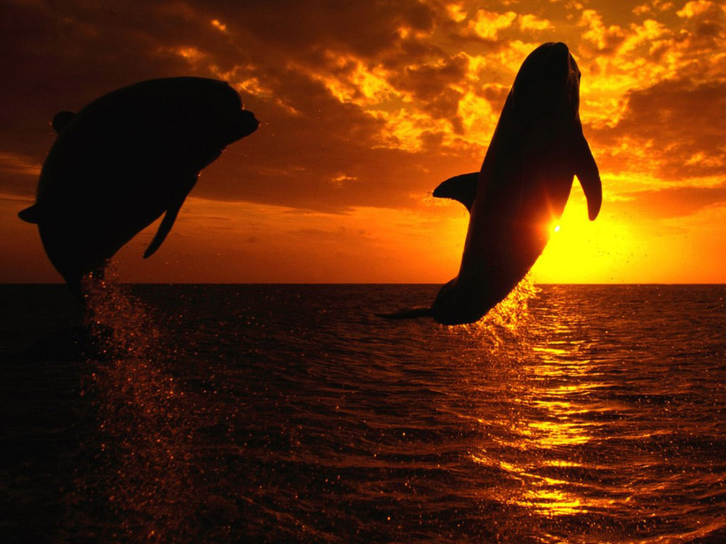 3d Dolphin Wallpaper For Windows 7 Orka Achtergronden Hd Wallpapers