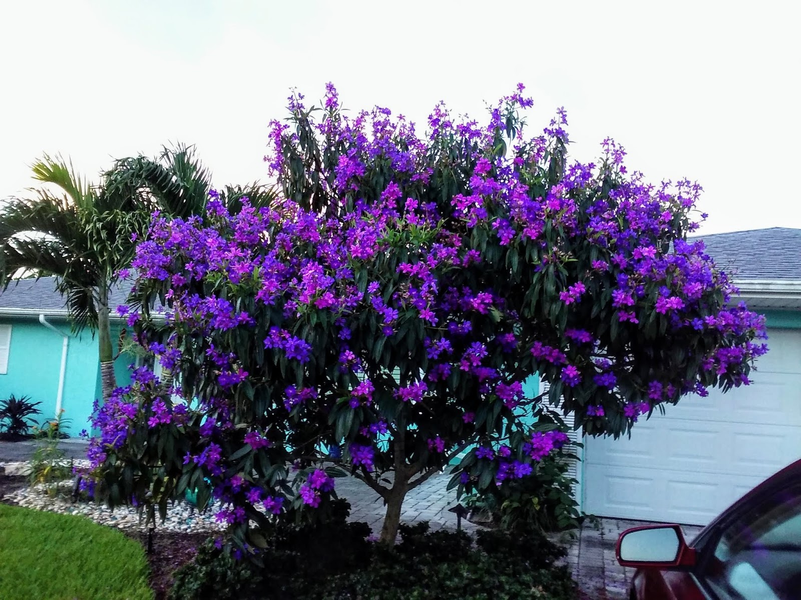 Mad Snapper The Purple Tree And The Blue House