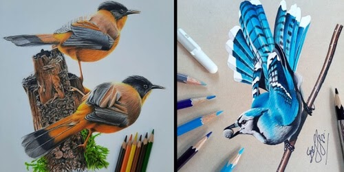 00-Bele-Birds-Drawings-www-designstack-co