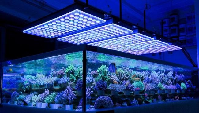 LED Lighting for Planted Aquarium