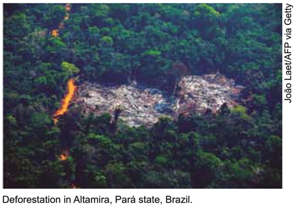 Deforestation in Altamira, Pará state, Brazil.