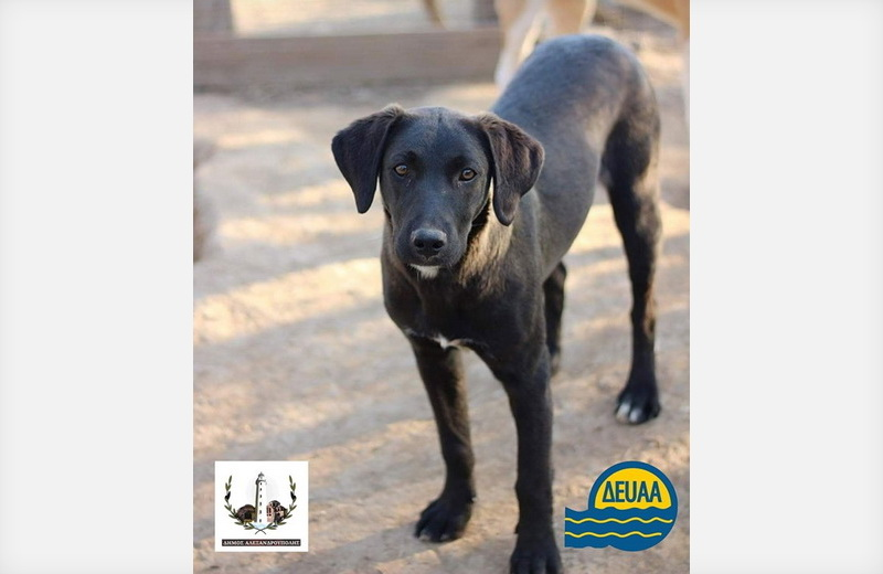 Με έκπτωση 50% στους λογαριασμούς της η ΔΕΥΑ Αλεξανδρούπολης ενισχύει την προσπάθεια υιοθεσίας αδέσποτων ζώων