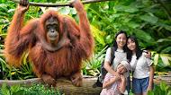 2021 新加坡动物园