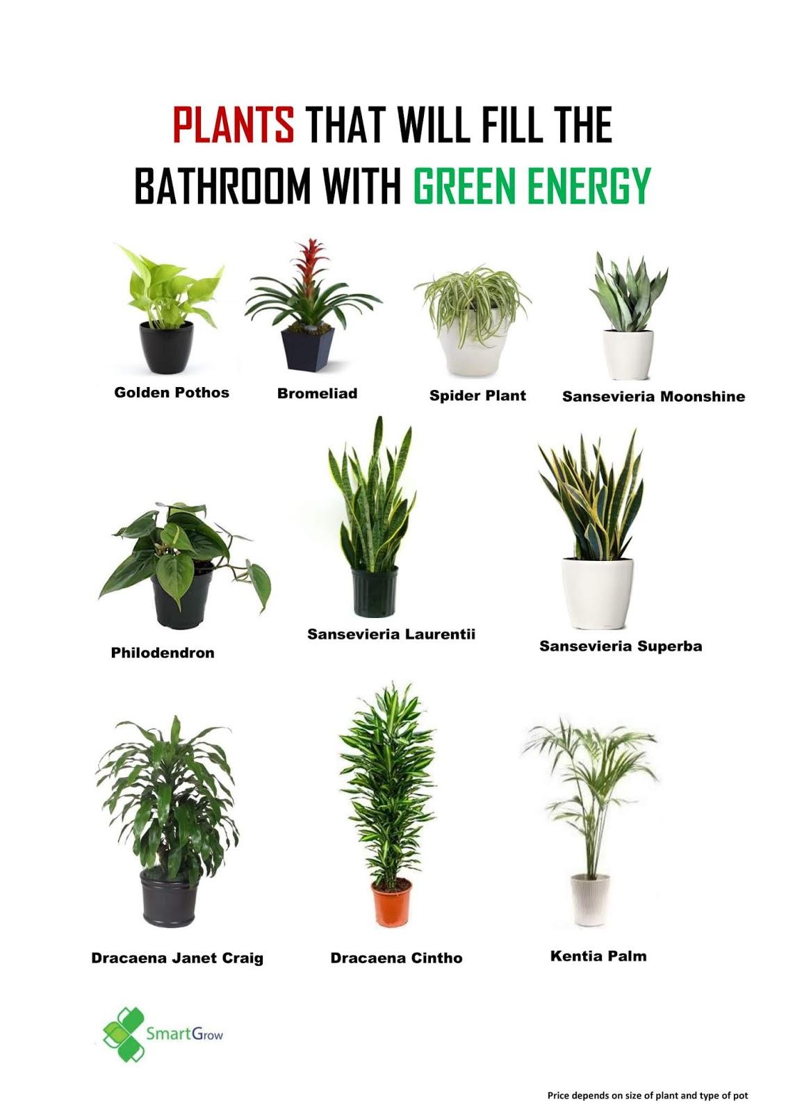 Smartgrow Agro Idea Pokok Hiasan Dalam Rumah Atau Pejabat