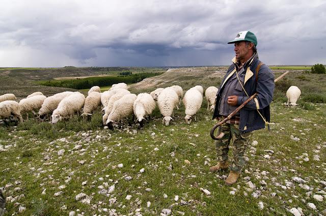 rol de un pastor, rol del pastor