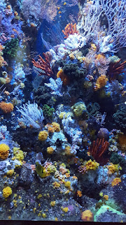 Beautiful moonlight corals