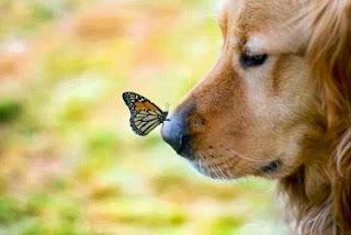smesne slike pas sa leptirom na njušci