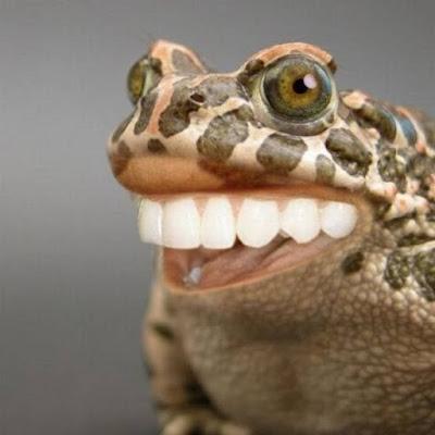 rana coi denti bianchi