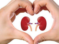 Ginjal (Organ Tubuh Manusia berbentk Seperti Kacang) dengan Fungsi Detoksifikasi