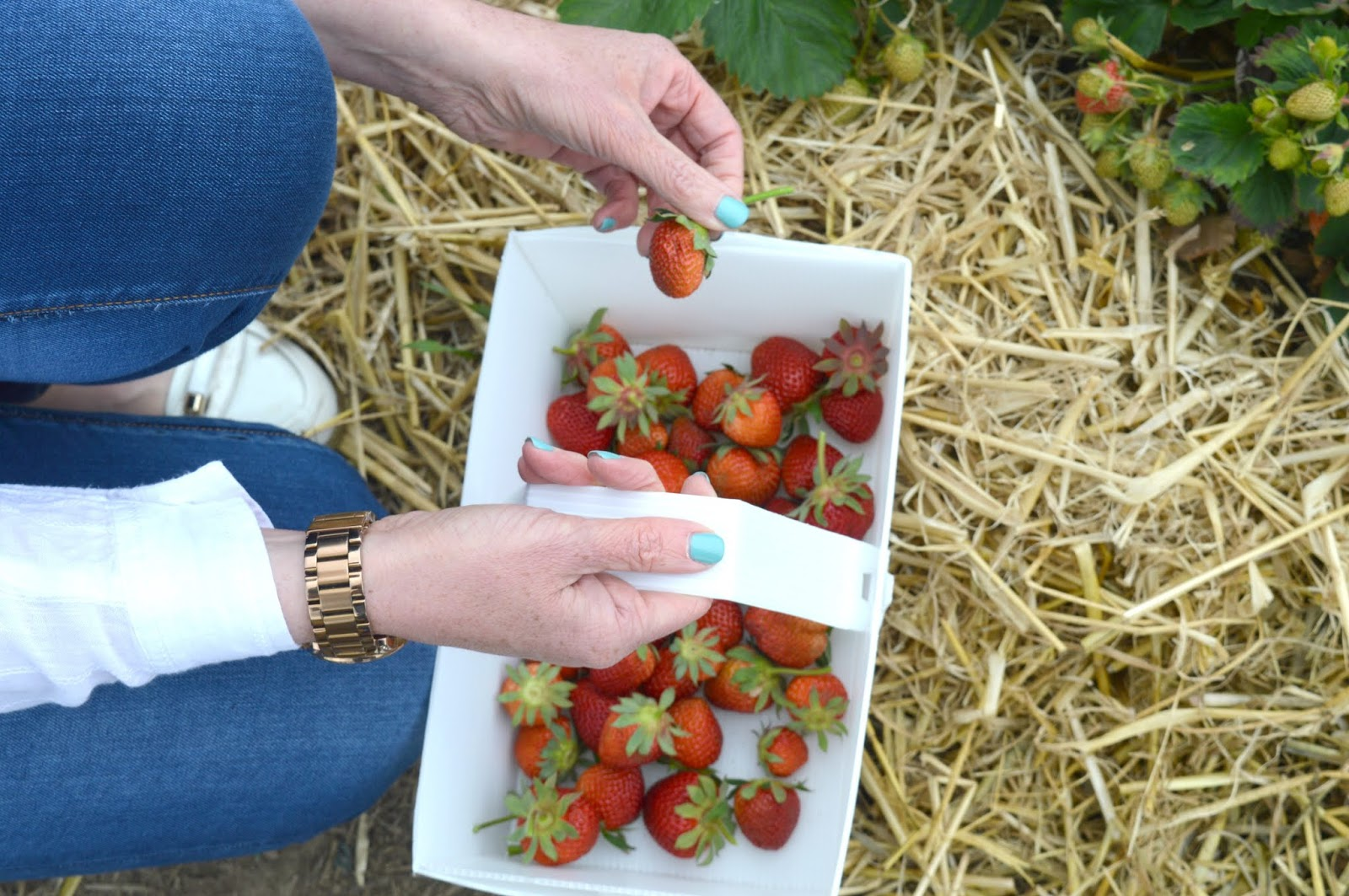 Strawberry Picking Brocksbushes - Northumberland