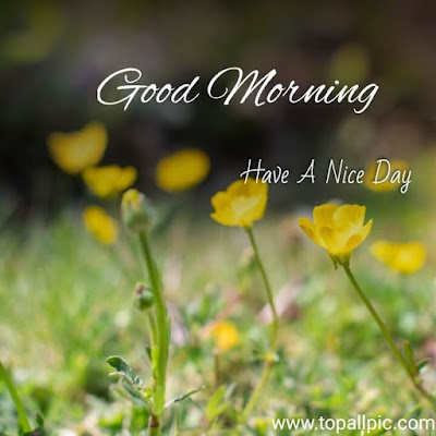 good morning flowers with images