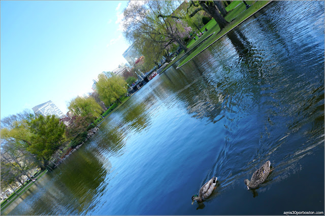 Lago del Boston Public Garden