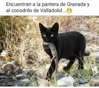 Memes pantera Granada