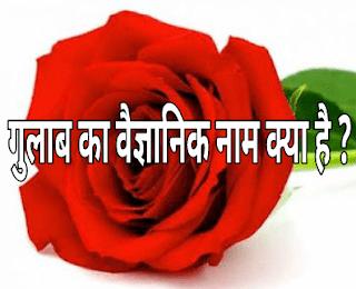 गुलाब का वैज्ञानिक नाम क्या है ?  - What is Scientific Name of Rose ?