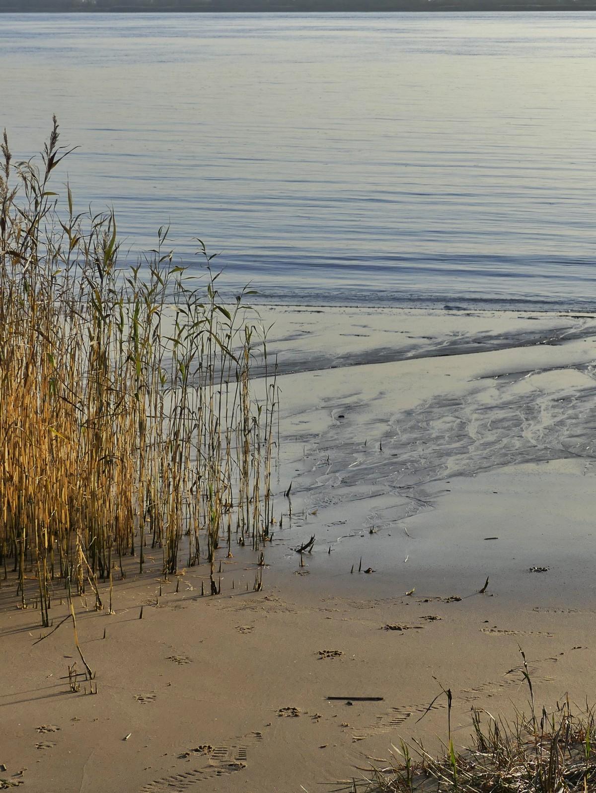 Kollmar strand
