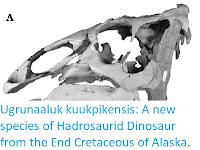 https://sciencythoughts.blogspot.com/2015/10/ugrunaaluk-kuukpikensis-new-species-of.html