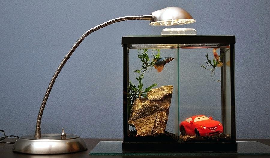 Apakah Ikan Cupang Menyukai Cahaya Aquaama