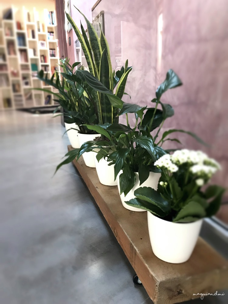 DECORACIÓN. Idea para decorar con plantas tu hogar.