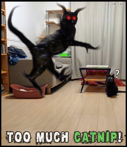 Photoshopped Cat picture •  Black cat high on catnip! He's flying in the room, haha [cat-gifs.com]
