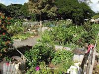 Growing various plants - Foster Community Garden, Honolulu, HI