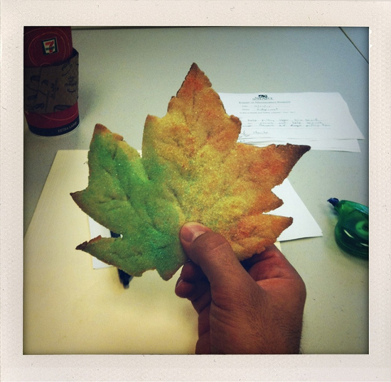 Large leaf cookie for Fall dusted in red and green edible glitter