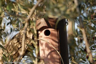 Caja nido de cemento