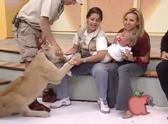 A Lion Grabbed Her Baby On Live TV. What The Handler Told Mom To Do Sounds Insane
