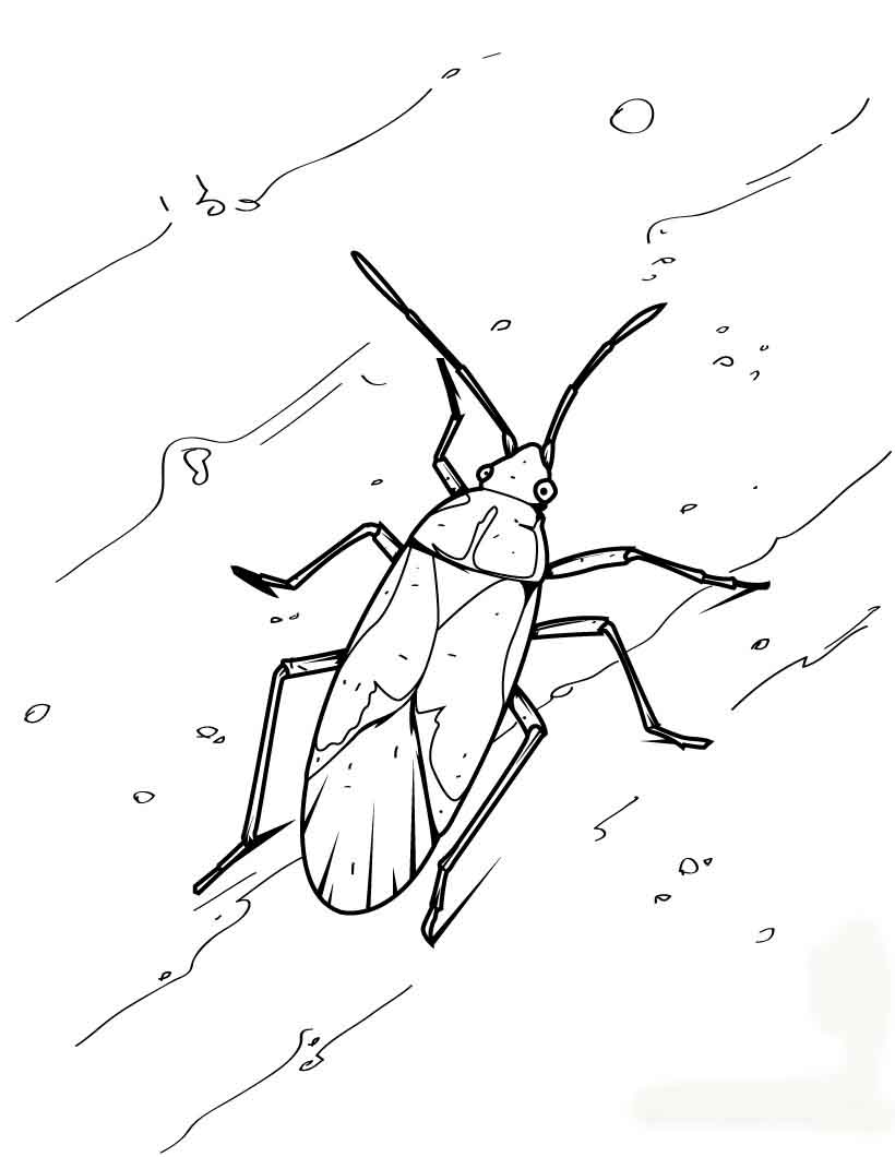 Insect Animal Coloring Pages Ideas